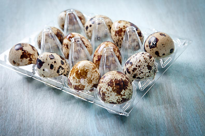 Vacuum formed collation and tray holding quails' eggs
